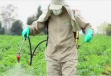 Semarnat, contra plaguicidas altamente peligrosos