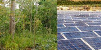 Yucatán, selva presta mas servicios que fotovoltaica