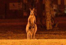 Equiparan estragos por incendios en Australia con holocausto nuclear