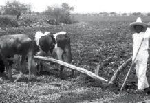 AMLO conmemora expedición de la Ley Agraria, inaugura obras en Ayala