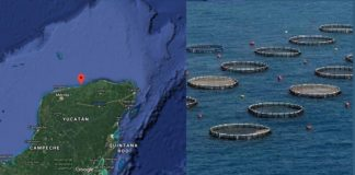 México y China acuerdan impulsar maricultura
