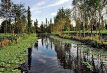 Humedales desaparecen a mayor velocidad que los bosques
