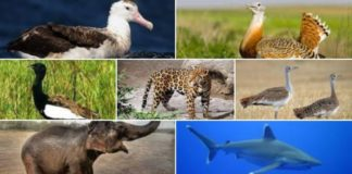 Ingresan 7 a la lista de especies en peligro de extinción