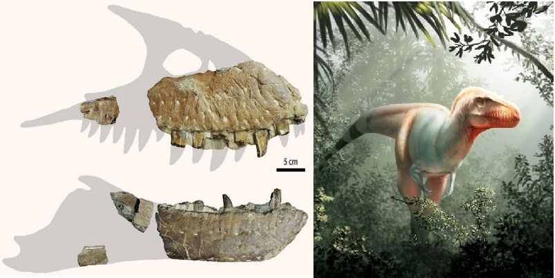 Descubren a un súper tiranosaurio, el