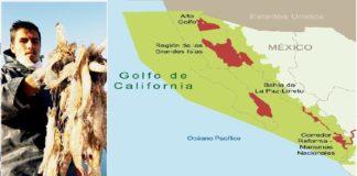 México cuida Alto Golfo de California