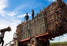 Azúcar mexicana de exportación