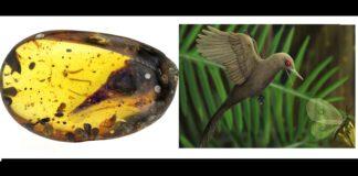 Dinosaurio del tamaño de un colibrí