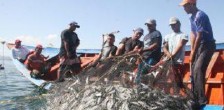 Vaquita marina, embargo ampliado